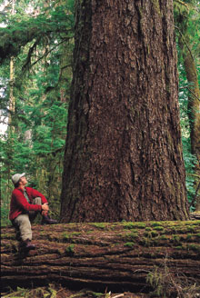 24ab1-bc-cathedral_grove_national1